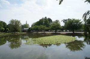 水城公園ホテイアオイ2